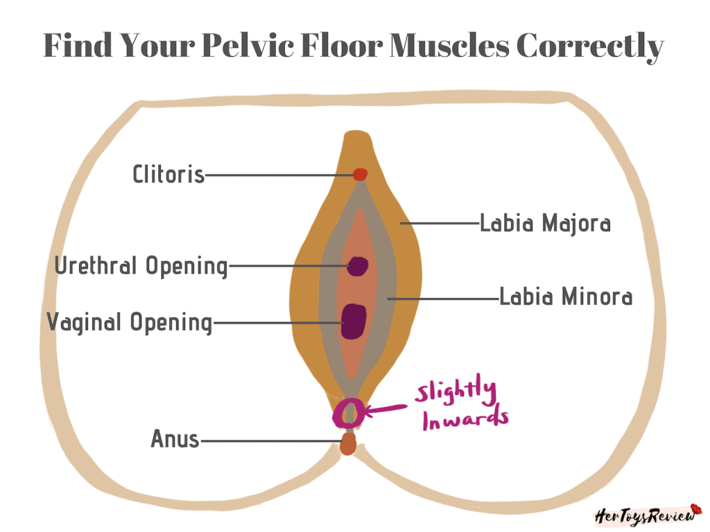 Find Pelvic Floor Kegel