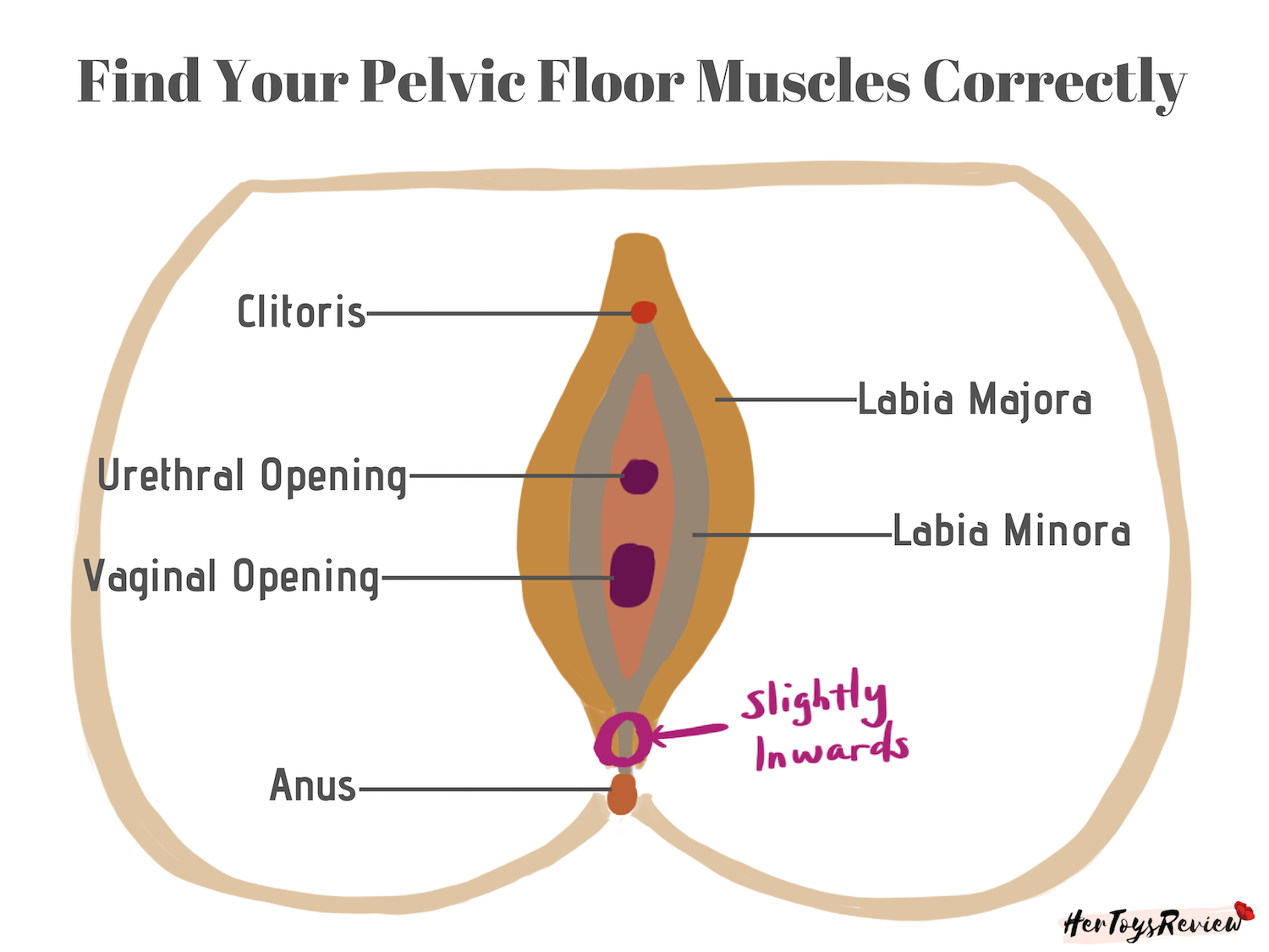 Find Pelvic Floor Kegel